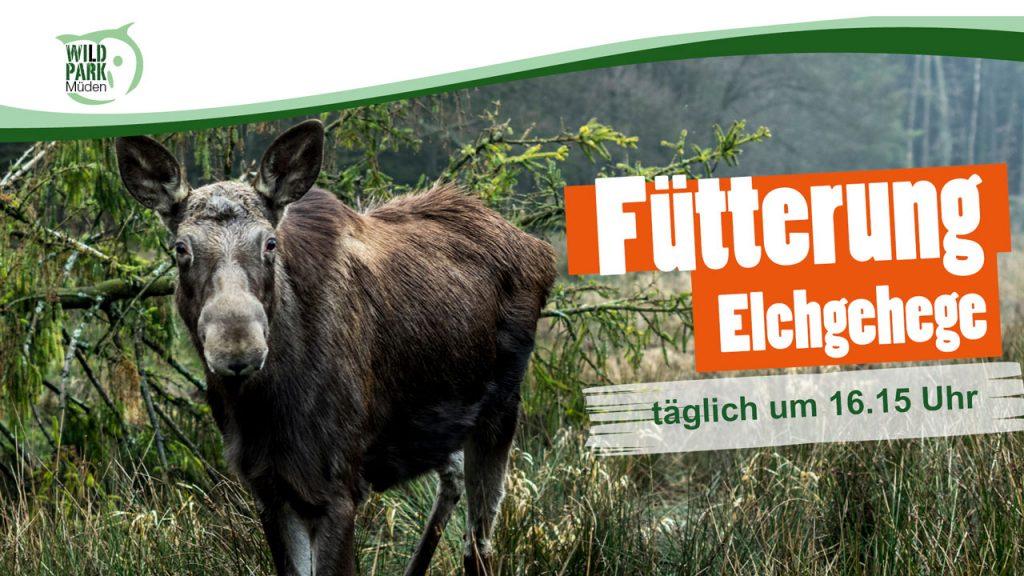 Fütterung Elch Wildpark Müden