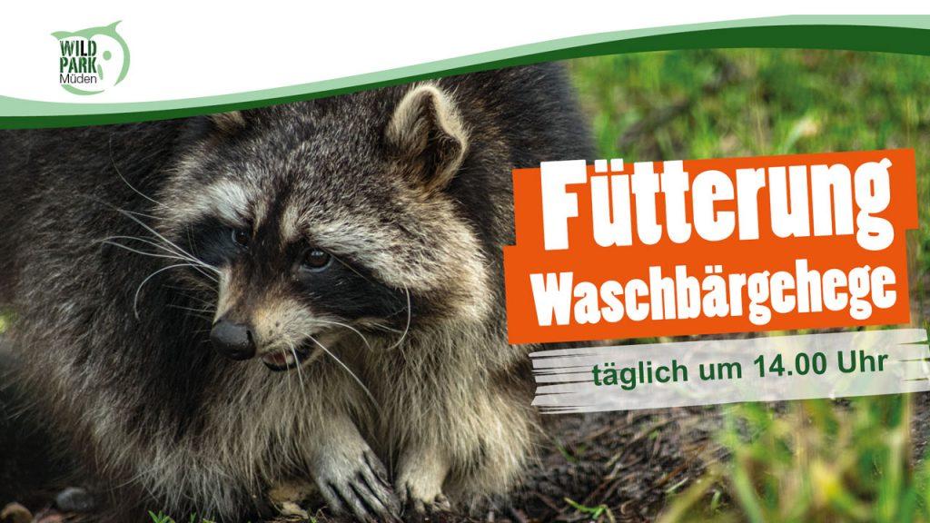 Fütterung Waschbär Wildpark Müden