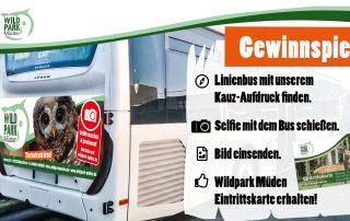 Gewinnspiel Wildpark Müden Bus