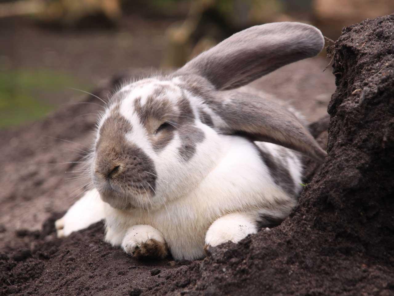 Kaninchen Wildpark Müden