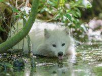 Marderhund Wildpark Müden