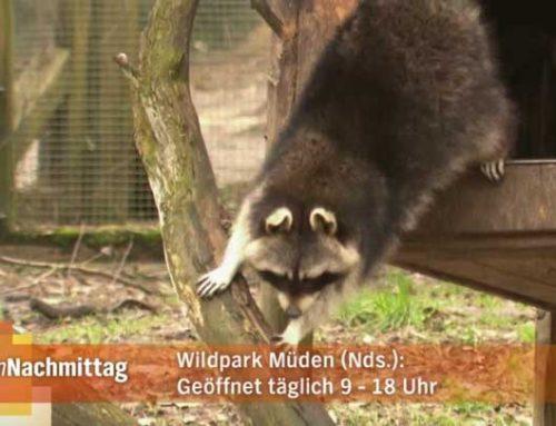 """Ausflugziel in der NDR Sendung """"meinNachmittag"""""""