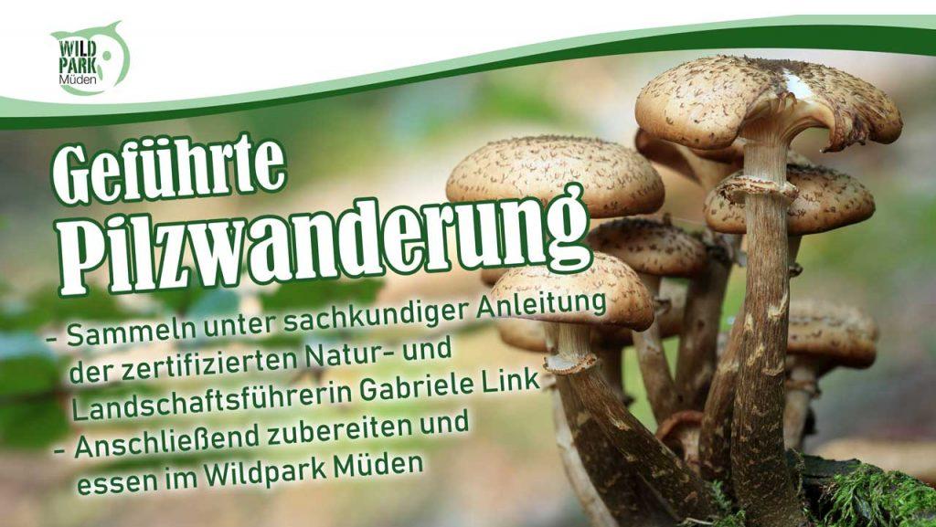 Pilzwanderung Wildpark Müden