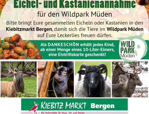 Große Eichel und Kastanien Sammelaktion für die Tiere im Wildpark Müden
