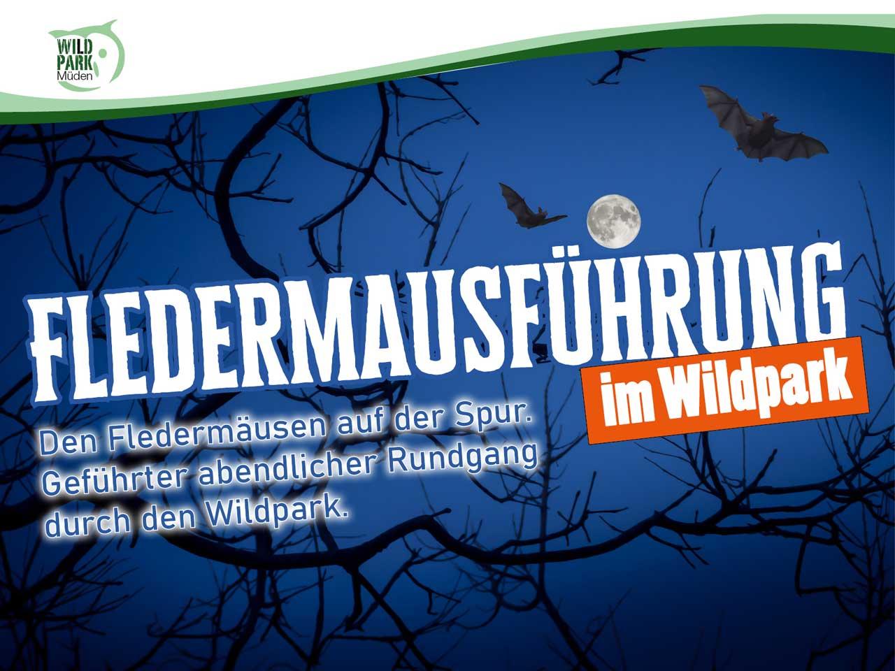 Feldermausführung im Wildpark